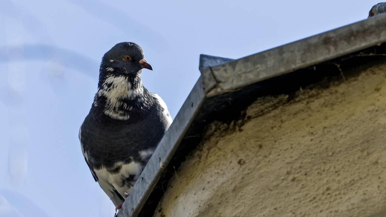 Zabezpieczenia przed ptakami