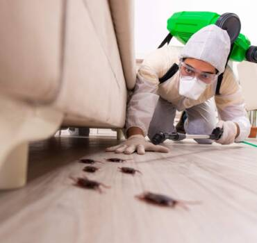 Zwalczanie karaczanów: prusaków, karaluchów